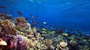 """<img src=""""Great Barrier Reef"""" alt=""""Great Barrier Reef"""" >"""